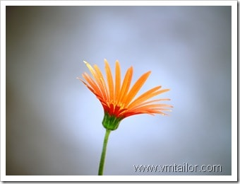 flower by vivek tailor