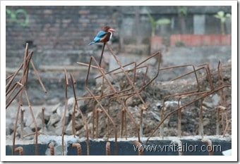 Kingfisher by Vivek Tailor