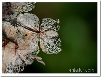 leaf by Vivek Tailor