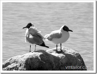 seagulls by Vivek Tailor